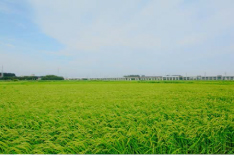 埼玉の米 Rice